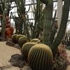 ぐんまフラワーパーク|雨模様の天気でも大丈夫!大きな温室完備の植物園:群馬県前橋市