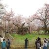 日本三大桜の1つ山高神代桜の有無を言わさぬパワーに感動