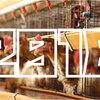 【2018年】「採卵鶏飼養頭数」ランキング