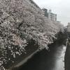 桜はいつも通りなのに・・・