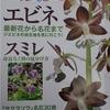 in International Orchid Festival / Japan Grand Prix, Tokyo.