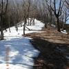 残雪とフクジュソウの仰烏帽子山から桜島見ゆ