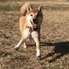 子犬の問題行動を直すには「思いっきり走り回らせる」が一番だと実感