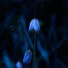 『写真』青いの