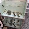 水槽飼育当歳魚