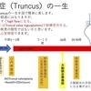 総動脈幹症(Persistent truncus arteriosus)について Truncusの血行動態high flowから心内修復術へ 疾患26