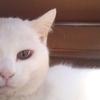 白猫の幻を見た?
