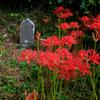 【秋の散歩】丹沢大山のもう一つの登山口・日向薬師を歩く【意外と彼岸花】