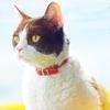 「旅猫リポート」名主役猫ナナの本名と現在はどうしている?