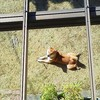 犬のウンチ