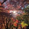 11/23 高尾山 薬王院