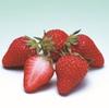 【ふるさと納税】香川県東かがわ市 幻の品種 女峰苺が届きました!