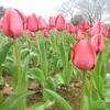 万博公園 春の花 花言葉 その6
