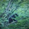 穂高連峰~夏の北穂高岳・涸沢にクマが出た