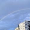 早朝、マロは虹の橋を駆け抜けていった