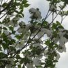 四月の花壇(続)
