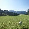 ゴルフを通した観光振興。宮崎市での取り組みを伺いながら。