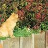 近所のブサ猫さん2