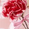 日本一売れる花屋