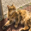 【一日一枚写真】神戸のソマリ猫③【一眼レフ】