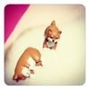 キャンドゥのガーデンマスコット「柴犬コロ/おひるね」&「ふせ」