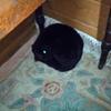 夜になるとベッドの隣に謎の黒い毛玉が置いてあるんだけど。