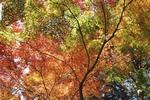 東山動植物園の紅葉を見に行ってきました