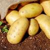 ドイツでジャガイモが普及するまでの歴史