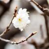 遊歩道の桜ほか 03/10