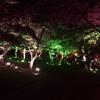 デジタルアートで彩る桜の名所 ときわ公園