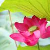 現地在住だからこそ知るベトナムの生活や観光のおすすめ情報を発信します。