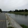 鴨川の水位が高い!