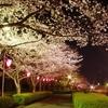 館林市さくら開花情報~ソメイヨシノも一気に開花・ライトアップこいのぼりとともに夜桜を楽しもう〜【平成30年3月26日〜27日】