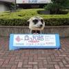 <宮津市>『関電が運営する京都府北部で唯一の水族館』魚っ知館