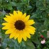 花の寿命も様々