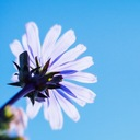 sun-flower8's diary