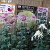 弥彦神社菊まつり2011(西蒲原郡弥彦村)