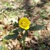 植物の本質をみるための植物観察~主観をはずす その1