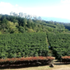 コーヒー農園があるコスタリカの隠れ人気カフェ