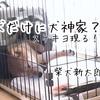 柴犬の寝顔は可愛いとは限らない?