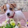 子犬の育て方|今日から一緒に暮らすためのペット用品10