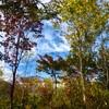 秋の白馬岩岳、ねずこの森を散策してきたよ!紅葉がとても綺麗