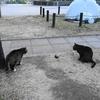 1月後半の #ねこ #cat #猫 その2