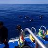 体験ダイビングのおすすめはビーチ?or ボート?それぞれの違いを解説