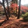 京都・山科毘沙門堂の美しい紅葉、有名な散りもみじ