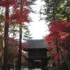 平林寺の紅葉が美しすぎる!見頃、アクセス、混雑状況は?【埼玉・新座市】