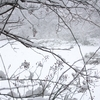 雪視症の読み方や症状、見え方とは?ビジュアルスノウの特徴や原因、自閉症との関連性