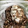 浜松市での庭木にできたスズメバチの巣を駆除してきました