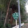 林道 湯ノ花線