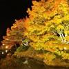 【香川】栗林公園の紅葉ライトアップは12月1日(日曜)まで